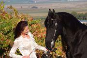 Хорошо обученные фризская лошадь для вас