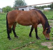 Лошадь очень красивая