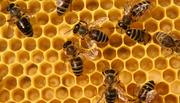 деревянные или пластиковые рабочие ульи и корпуса. перезимовавших пчёл