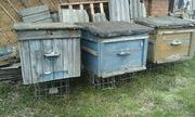 Пчелиные домики с сушью,  пчелиные семьи